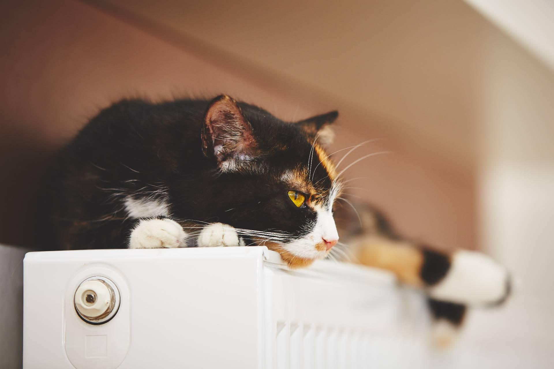 Consejos sobre la calefacción de gasoil en el hogar